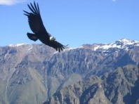 Colca Canyon 2 Day/1 Night Tour  (From Arequipa return to Arequipa.)